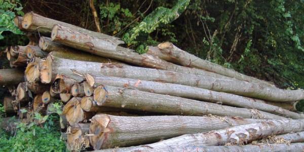 Brennholzverkauf